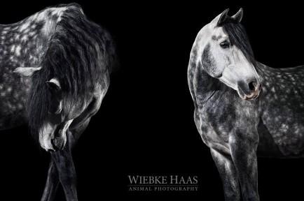 Wiebke_Haas_02
